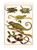 Lizards, Snakes, Chameleons Prints by Albertus Seba