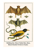 Bulldog Bat, Short-Tailed Bat, Bats, Black Headed Oriole and Snake Prints by Albertus Seba