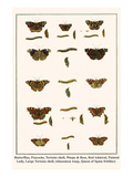 Butterflies, Peacocks, Tortoise Shell, Wasps and Bees, Red Admiral, Painted Lady, etc. Prints by Albertus Seba