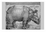 Rhinoceros Fotografia por Albrecht Durer