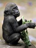 APTOPIX Zoo President Kiki Photographic Print by Elise Amendola
