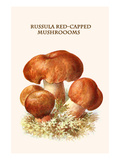 Russula Red-Capped Mushroooms Posters by Edmund Michael