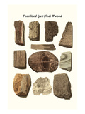 Fossilised (Petrified) Wood Prints by James Parkinson