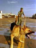 Vietnam War U.S.A.F. Guard Dog Photographic Print by  Associated Press
