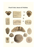 Fossil Crabs, Insects and Trilobites Prints by James Parkinson