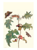 Moths and a Potato Plant Premium Giclee Print by Maria Sibylla Merian