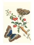Barbados Cherry Tree with a Moth Plakaty autor Maria Sibylla Merian