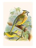 Green Cardinal Premium Giclee Print by F.w. Frohawk