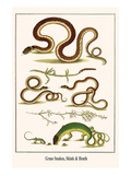 Grass Snakes, Skink and Heath Posters by Albertus Seba