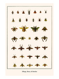 Bugs, Bees, and Beetles Print by Albertus Seba