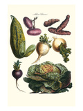 Vegetables; Melon, Onion, Cabbage, Potato, Raddish Prints by Philippe-Victoire Leveque de Vilmorin