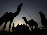APTOPIX Pakistan Eid Al Adha Photographic Print by Mohammad Sajjad