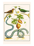 Serpents and Birds Kunstdrucke von Albertus Seba
