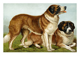 Rough Coated St. Bernards Posters by Vero Shaw