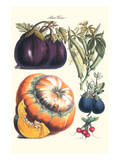 Vegetables; Eggplant, Raddish, Pumpkin, Gourd, Pepper and Okra Posters by Philippe-Victoire Leveque de Vilmorin