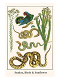 Snakes, Birds and Sunflower Posters by Albertus Seba