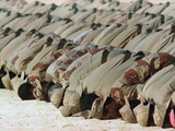 Saudi Arabia Army Kuwaiti Voluntees Prayer Kuwait Crisis Photographic Print by Diether Endlicher