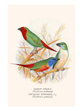 Parrot Finch Prints by F.w. Frohawk