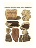 Fossilised (Petrified) Wood, Leaves and Bamboo Prints by James Parkinson