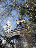 Eiffel Tower Photographic Print by Michel Lipchitz