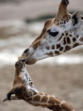 APTOPIX DEU Tiere Giraffenbaby Photographic Print by Kai-uwe Knoth
