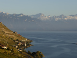 Switzerland Lavaux Photographic Print by David Azia