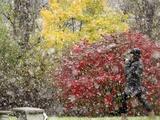 APTOPIX October Snow Lámina fotográfica por Gene J. Puskar