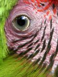APTOPIX Nicaragua Animal Rescue Photographic Print by Esteban Felix