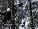 Norton Yellowstone 写真プリント : ローラ・ラウフ