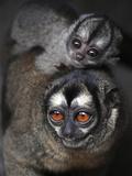 APTOPIX Colombia Zoo Photographic Print by Luis Benavides