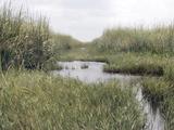 Florida Drought Photographic Print by J. Pat Carter