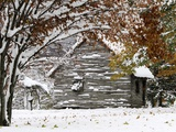 October Snow Photographic Print by Pat Wellenbach