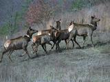 Travel Trip Elk Watching Photographic Print by Rhonda Simpson