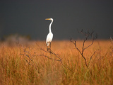 Everglades Restoration Photographic Print by J. Pat Carter