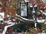 October Snow Photographic Print by Holly Ramer