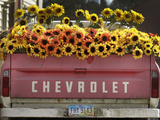 Chevrolet Photographic Print by Amy Sancetta