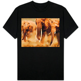 African Elephants T-shirts