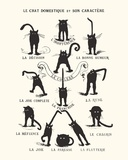 French Caractere Le Chat Domestique et son Caractere Stampa master