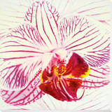 Orchid Mounted Print