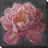 Vivid Floral 1: Peony Stretched Canvas Print