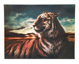Tiger Limited Edition by Nancy Glazier