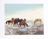 Watering Hole Limited Edition by Gwendolyn Branstetter