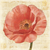 Blushing Poppy on Cream Posters by Albena Hristova