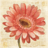 Blushing Gerbera on Cream Art by Albena Hristova