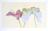 Botanical Collectable Print by Carol Ann Bolt