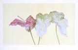 Botanical Collectable Print by Carol Ann Bolt