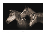 Three Ponies Prints by Robert Dawson