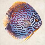 Little Fish I Prints by Patricia Quintero-Pinto