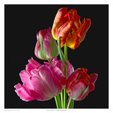 Parrot Tulips 2 Posters by Richard Reynolds