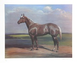 Quarterhorse Collectable Print by Helen Hayse